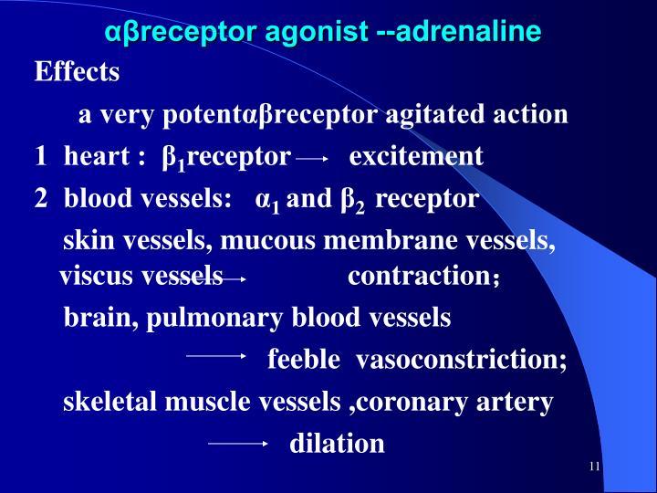 αβreceptor agonist --adrenaline
