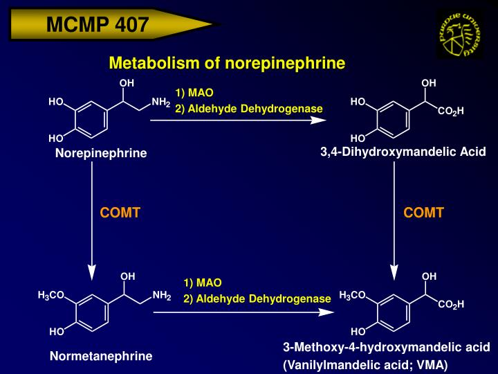 Metabolism of norepinephrine