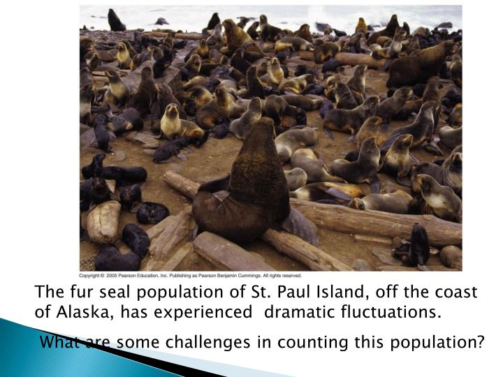 The fur seal population of St. Paul Island