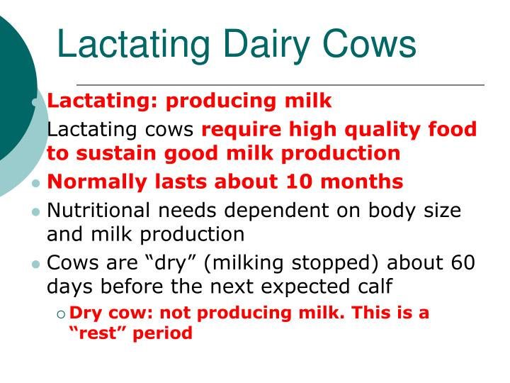 Lactating Dairy Cows