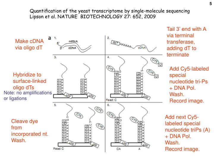 Quantification of the yeast transcriptome by single-molecule sequencing