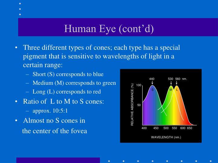 Human Eye (cont'd)