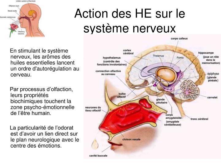 Action des HE sur le système nerveux