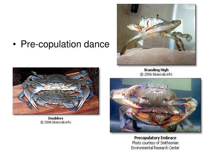 Pre-copulation dance