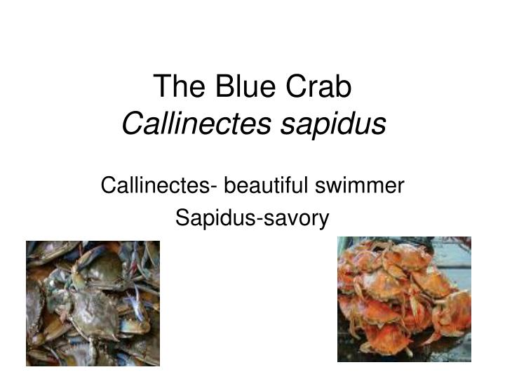The blue crab callinectes sapidus
