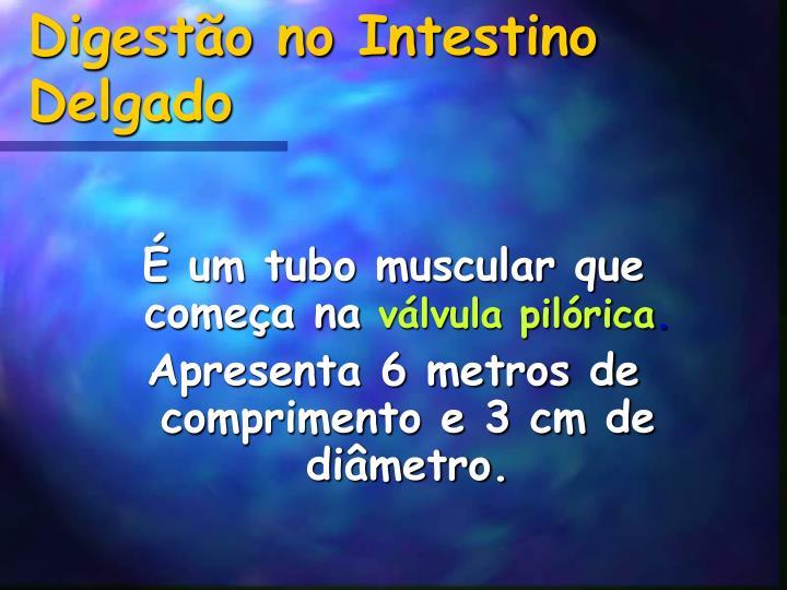 Digestão no Intestino Delgado