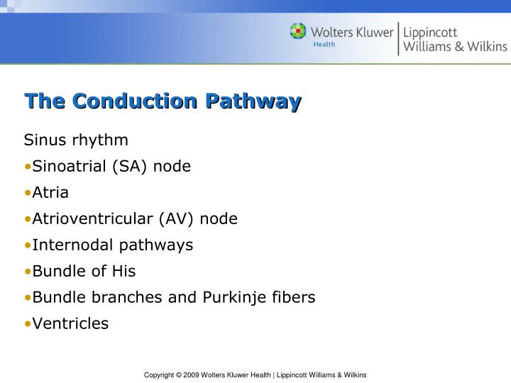 The Conduction Pathway