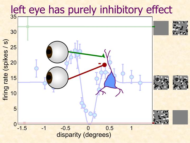 left eye has purely inhibitory effect