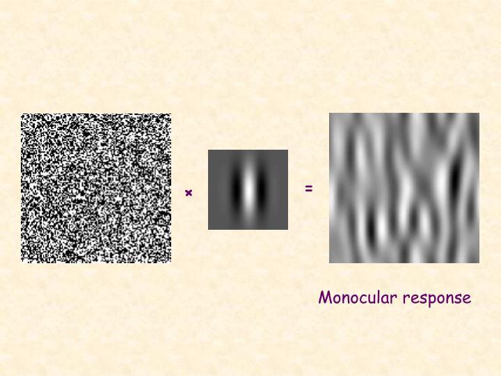 Monocular response