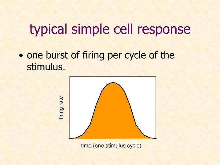 typical simple cell response