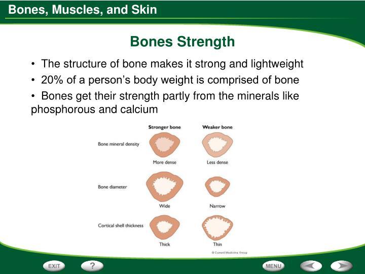 Bones Strength