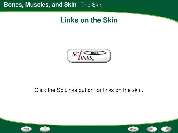 - The Skin
