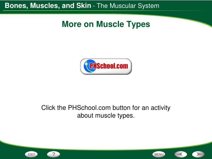 - The Muscular System
