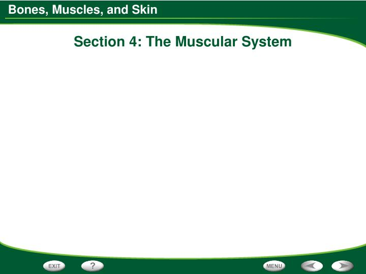 Section 4: The Muscular System