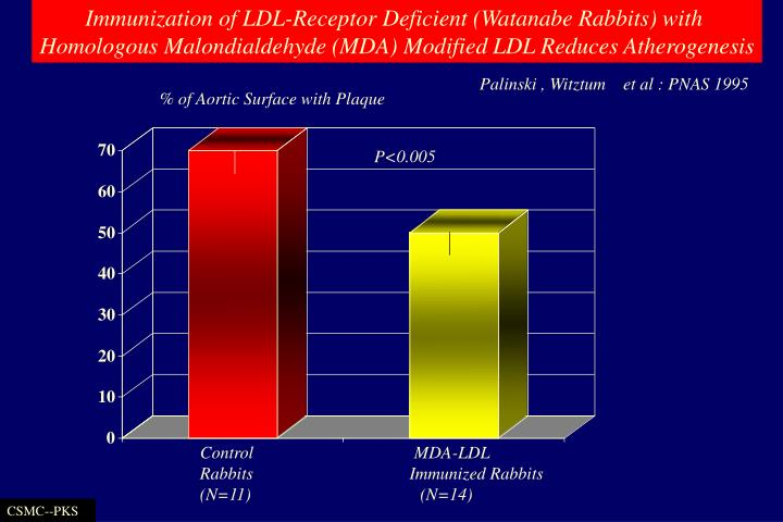 Immunization of LDL-Receptor Deficient (Watanabe Rabbits) with
