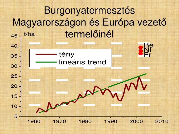 Burgonyatermesztés Magyarországon és Európa vezető termelőinél