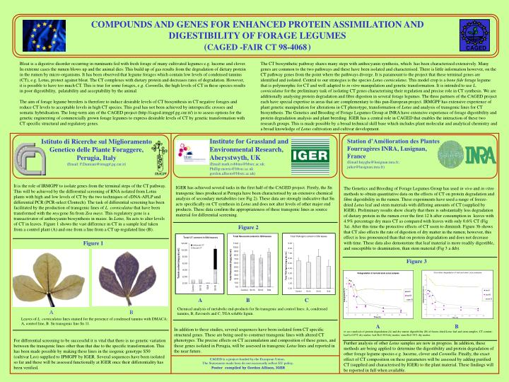 COMPOUNDS AND GENES FOR ENHANCED PROTEIN ASSIMILATION AND DIGESTIBILITY OF FORAGE LEGUMES