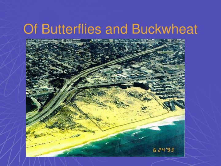 Of Butterflies and Buckwheat