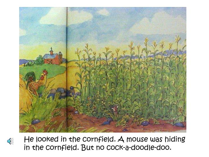 He looked in the cornfield. A mouse was hiding in the cornfield. But no cock-a-doodle-doo.