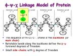 f y c linkage model of protein