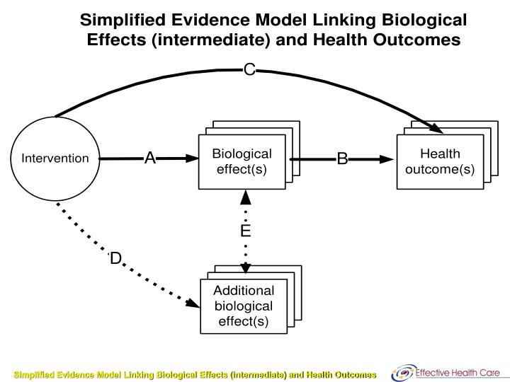 Simplified Evidence Model Linking Biological Effects (intermediate) and Health Outcomes