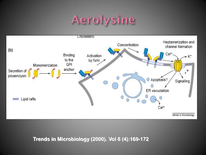 Aerolysine