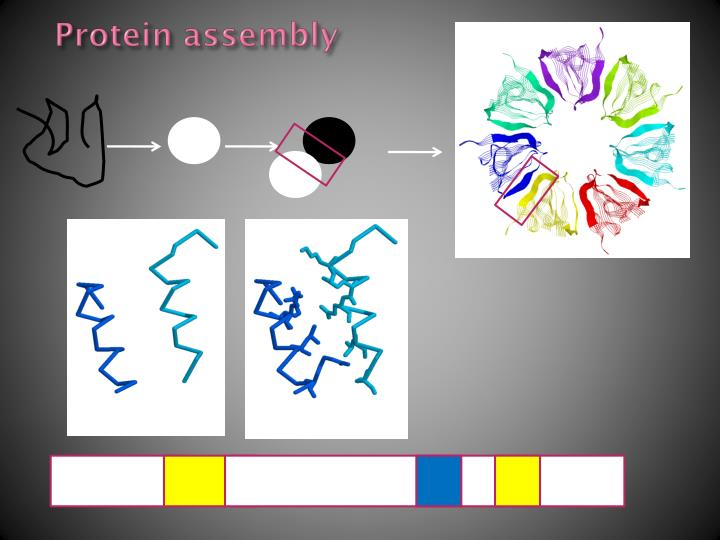 Protein assembly