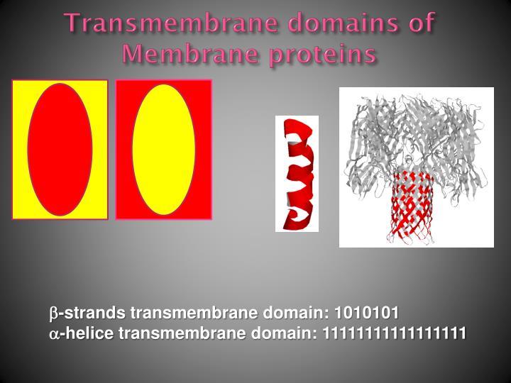 Transmembrane