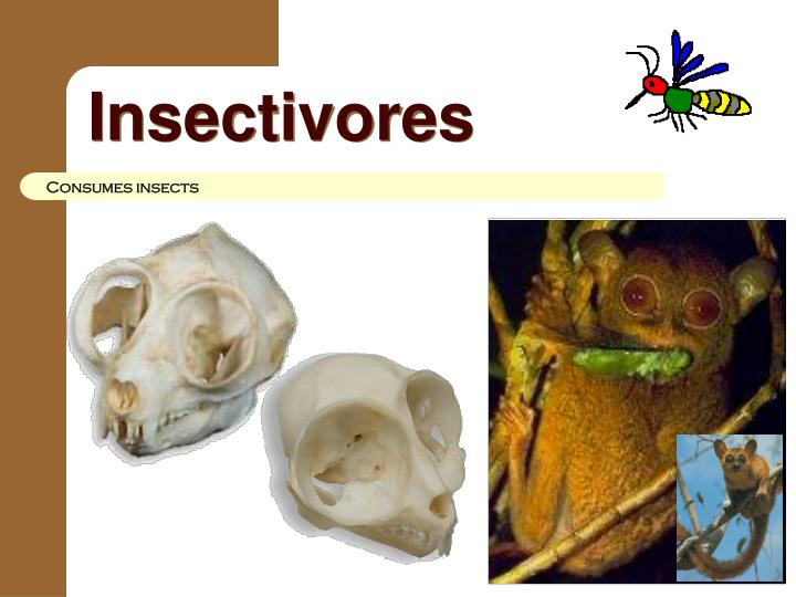 Insectivores