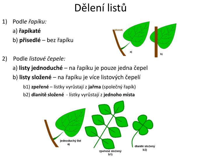 Dělení listů