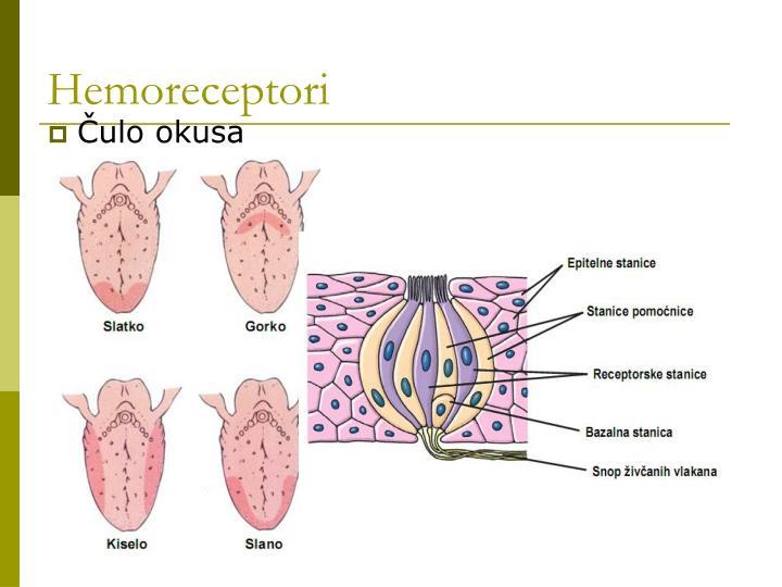 Hemoreceptori