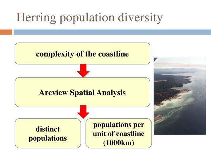 Herring population diversity