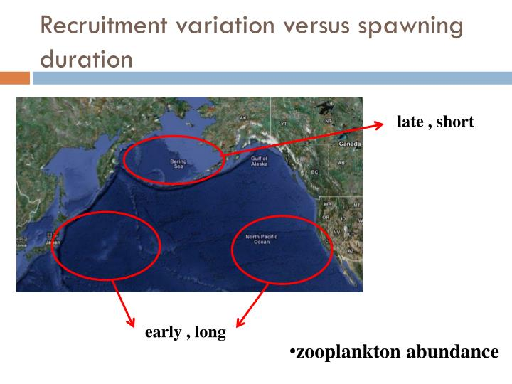 Recruitment variation versus spawning duration