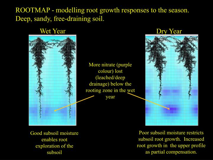 ROOTMAP - modelling root growth responses to the season. Deep, sandy, free-draining soil.