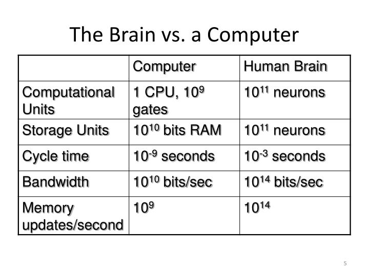 The Brain vs. a Computer