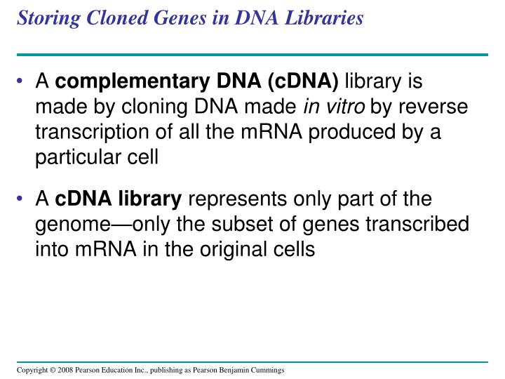 Storing Cloned Genes in DNA Libraries