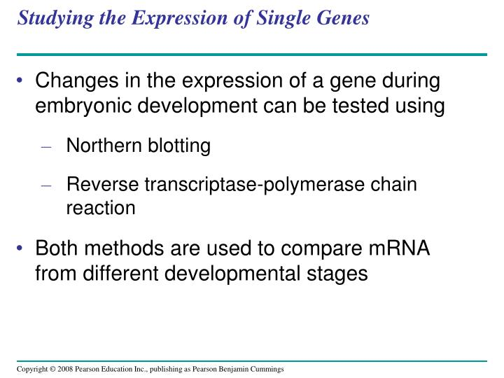 Studying the Expression of Single Genes