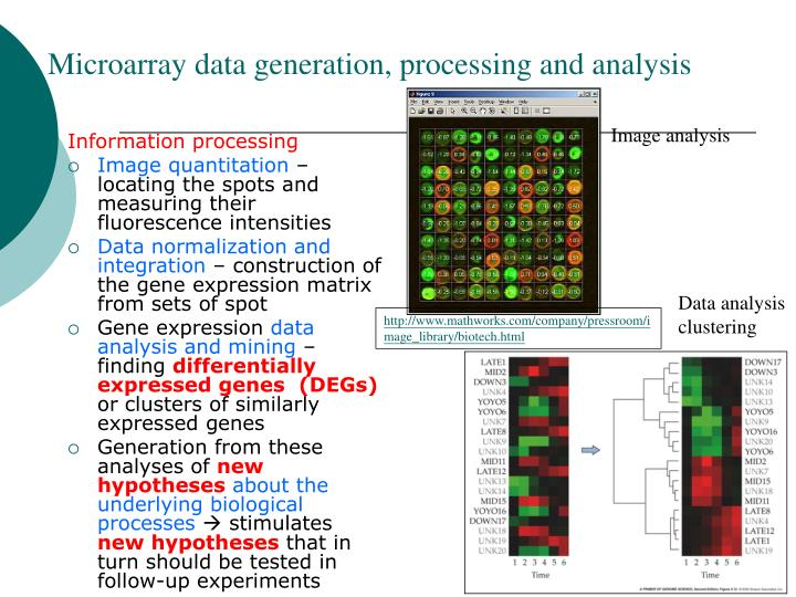 Microarray data generation, processing and analysis