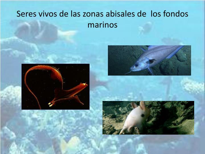 Seres vivos de las zonas abisales de  los fondos marinos