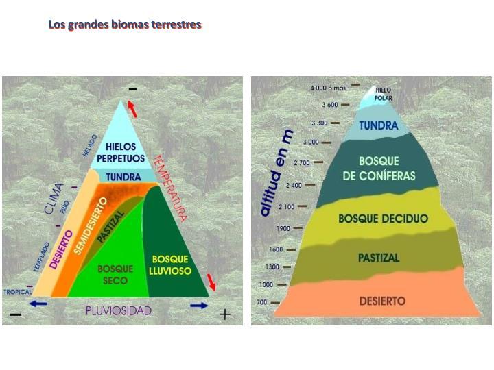 Los grandes biomas terrestres