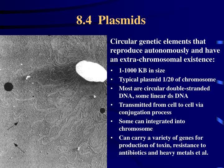 8.4  Plasmids