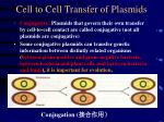 cell to cell transfer of plasmids