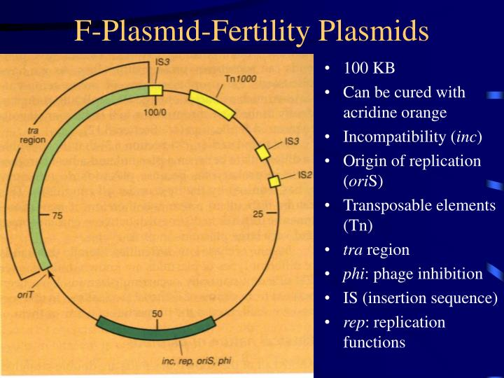 F-Plasmid-Fertility Plasmids