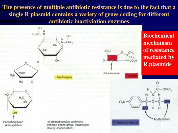 The presence of multiple antibiotic resistance is due to the fact that a single R plasmid contains a variety of genes coding for different antibiotic inactiviation enzymes