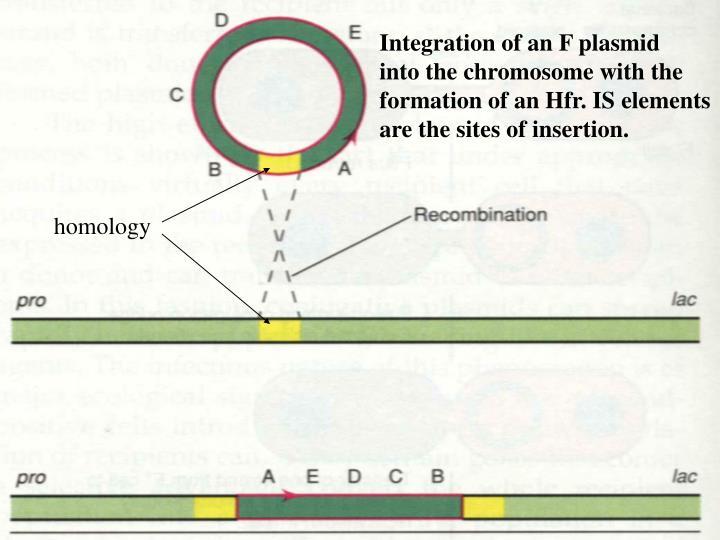 Integration of an F plasmid