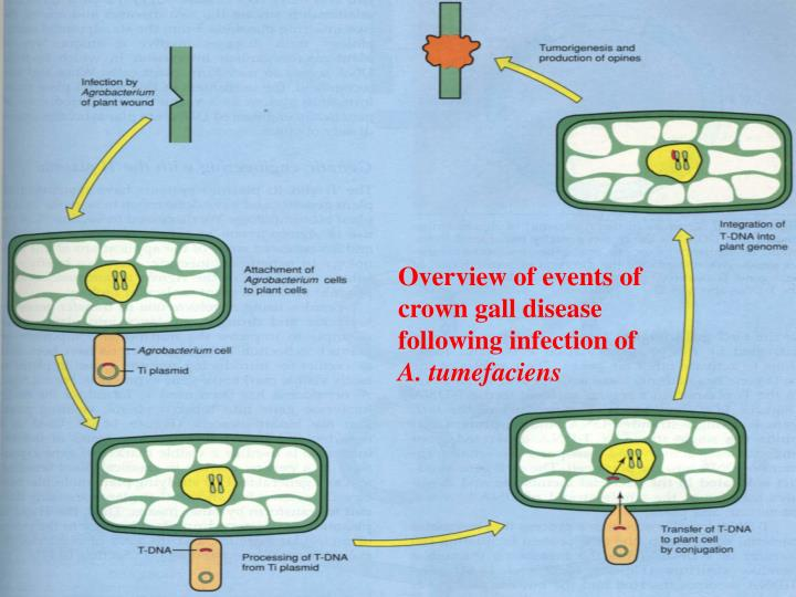 Overview of events of