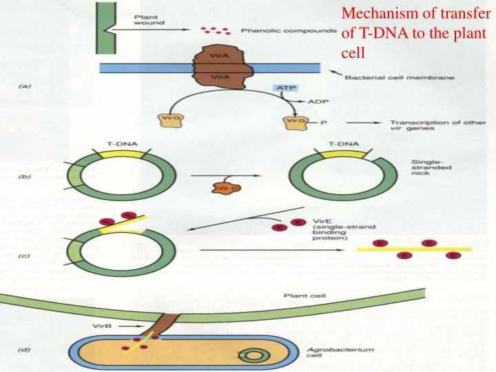 Mechanism of transfer