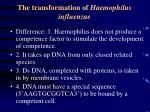 the transformation of haemophilus influenzae