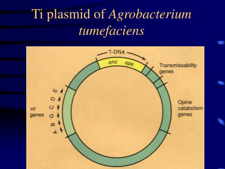 Ti plasmid of