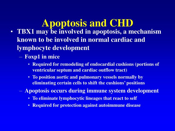 Apoptosis and CHD
